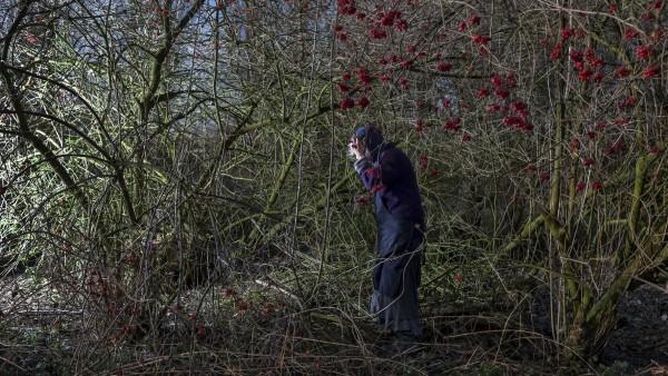 Hanne van der Woude - Emmy between the berries, Dodewaard, 2014