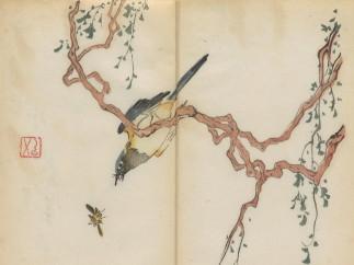 Bird on wisteria with flying cicada