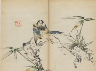 Preening Bird on Rock witn Bamboo