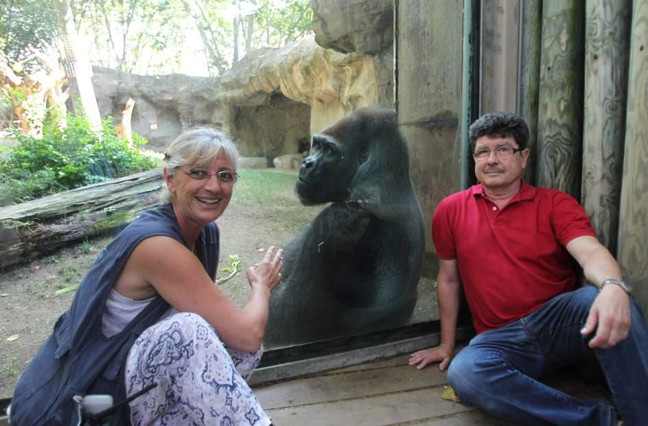 Por el bienestar de los gorilas