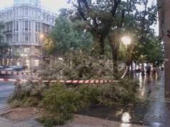 �rboles y ramas caen en Madrid en la tormenta y hay seis heridos