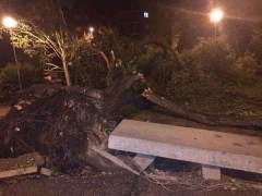 Aranjuez estudia pedir la declaraci�n de zona catastr�fica