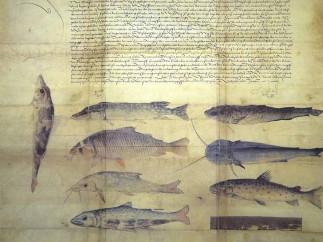 Fischereiordnung Kaiser Maximilians I o Reglamento de pesca del emperador Maximiliano I (1506)