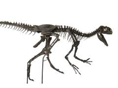 Se subasta Allosaurus