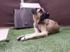 Un 16,5% de los hogares barceloneses conviven con perros