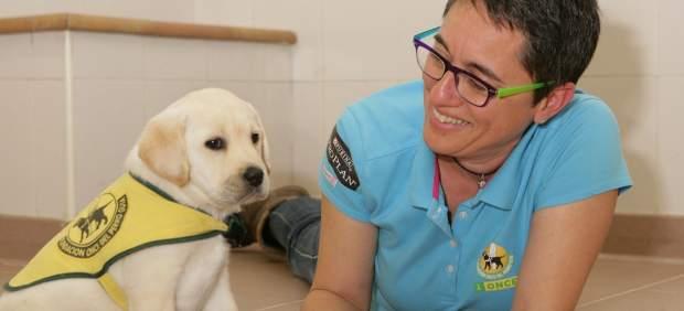 Así se entrena a un perro guía: dos años de formación para ser los ojos de quienes no ven