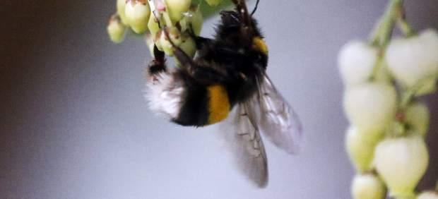Libando néctar
