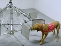 La sorprendente eficacia de los perros al detectar el c�ncer