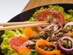 Insectos comestibles, una industria de futuro