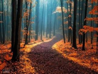 Bosques oto�ales
