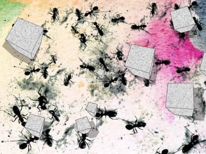 Hormigas negras