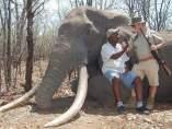 Elefante derribado