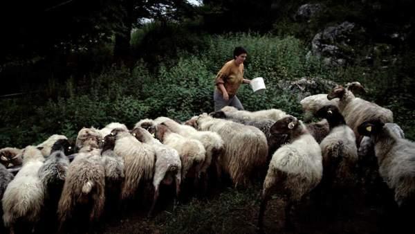Elena, pastora en Picos de Europa