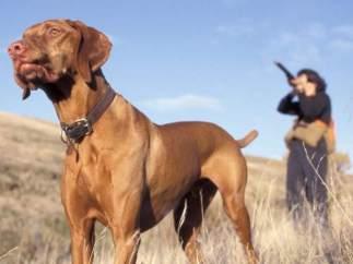 Un cazador y su perro
