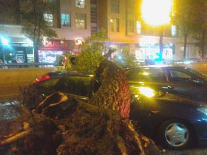 Árbol caído en Madrid