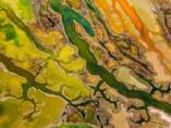Pere Soler - 'The Art of Algae'