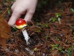 Micoturismo, economía y ecología