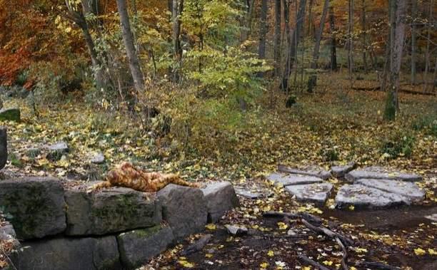 Modelo desnuda camuflada en un bosque