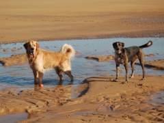 A la playa, con tu perro: las que te interesan este verano