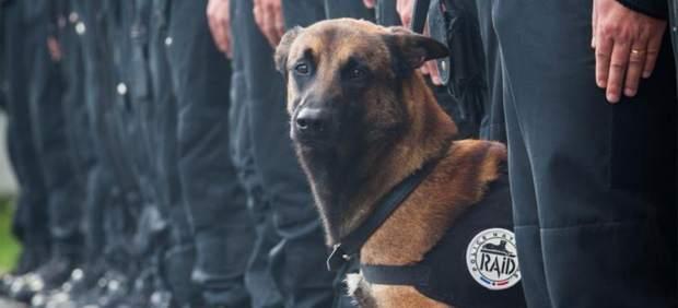 Diesel, el perro policía