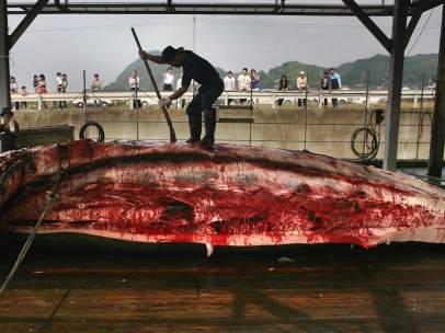 Pesca ballena