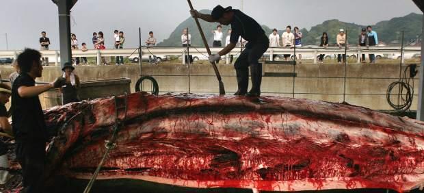 Japón inicia el sábado su temporada de pesca ballenera en el Pacífico norte