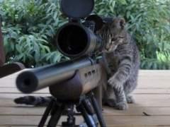 Gato con un arma