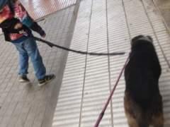 Ni�os con perro
