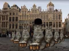 Los gatos promocionan Bruselas