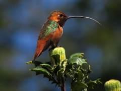 Las aves nos avisan de c�mo el cambio clim�tico afecta al planeta