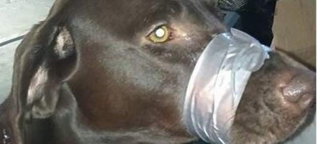 La Policía investiga la foto en Facebook de un perro amordazado para que se callara