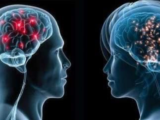 Dos cerebros