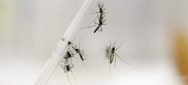 El 'zika' sigue su propagación por América
