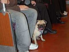 Los perros podrán entrar en el Metro de Madrid