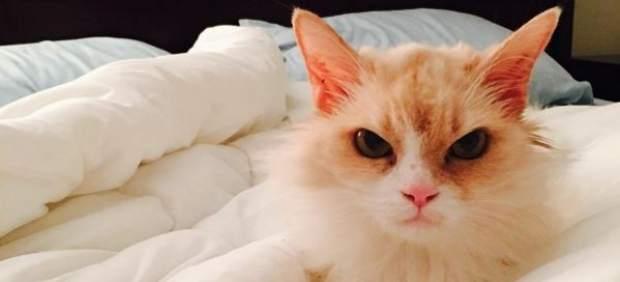 Pearl, la gata 'enfadada' que triunfa en las redes sociales