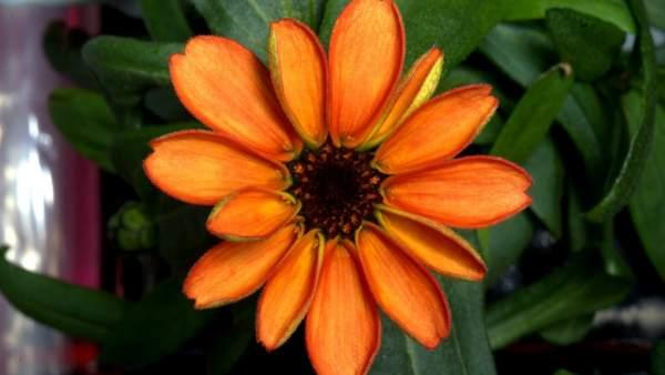 La primera flor que crece en el espacio