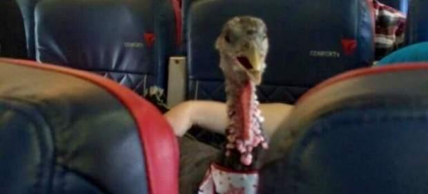 Un pavo en el avión
