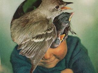 'Bird Brain', 2013