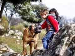 'Truman', un perro de terapia para niños con autismo en los Goya