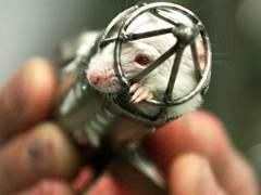 La Comisión Europea da un aviso a España por defectos en la protección de los animales de laboratorio