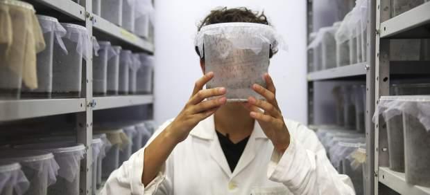 Ascienden a 12 los casos diagnosticados de Zika en Europa