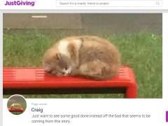Pasajeros se vuelcan para homenajear a Missy, la 'gata de la parada de bus'