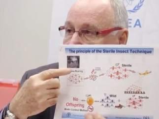 Energía atómica contra el mosquito del virus Zika