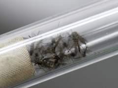Sanidad aconseja sexo con protección por el virus del Zika