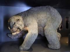 Diprotodon optatum
