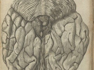 View of posterior brain From De Hominem by Rene Descartes