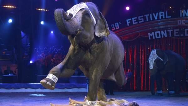 Circos con elefantes