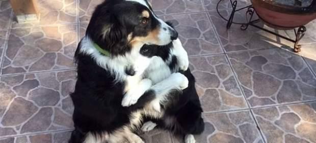El abrazo entre Dewey y Blaze les convierte en las estrellas de Facebook por San Valentín