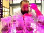 Científicos chilenos buscan crear superárboles