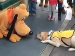 La emoción de un perro al conocer a Pluto triunfa en Facebook